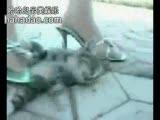 节目:又一个美女踩猫全过程!恐怖